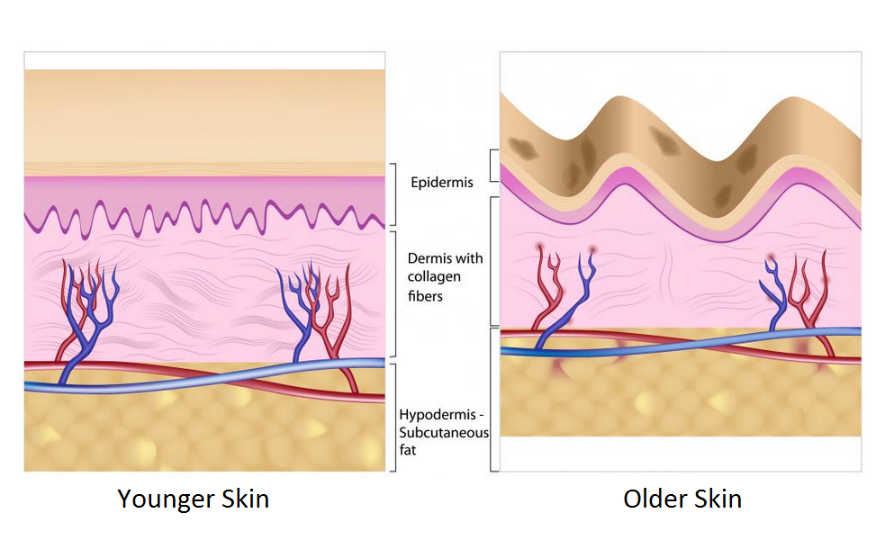 collagen skin different getting old supply